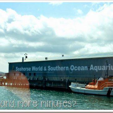 Seahorse World at Beauty Point, TAS