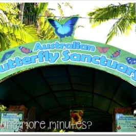 Australian Butterfly Sanctuary in Kuranda (Cairns)