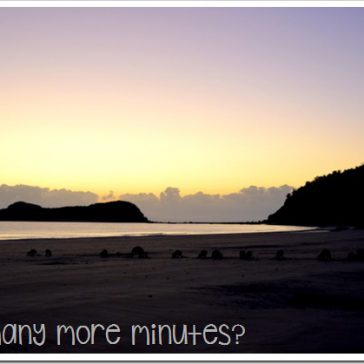 Sunrise With the Wallabies at Cape Hillsborough NP