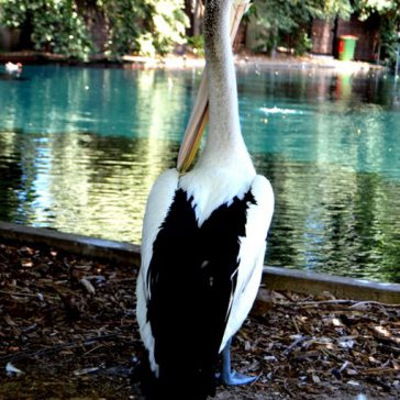 The Perth Zoo, part one