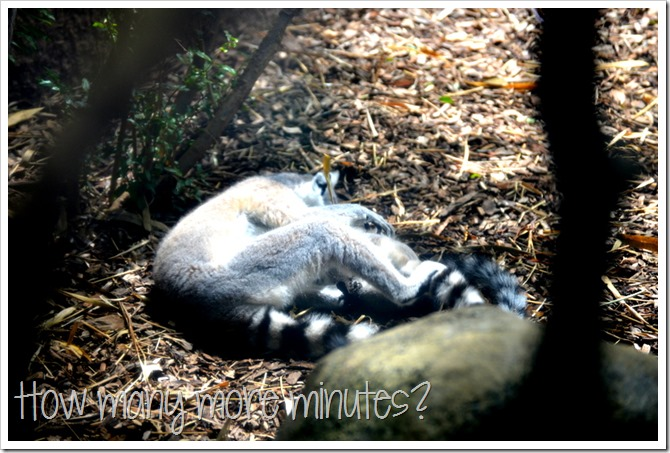 The Perth Zoo | How Many More Minutes?