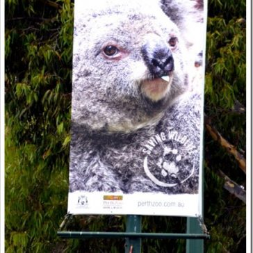 The Perth Zoo, part two